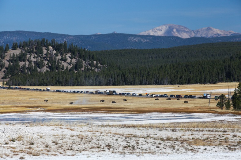 2016-10-16-blog-yellowstone-roadtrip-traffic-jam